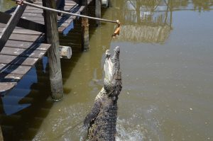 Hungry Crocodile!
