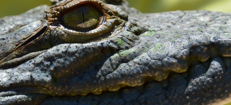 Activities for Kids in Bucerias: Crocodiles!